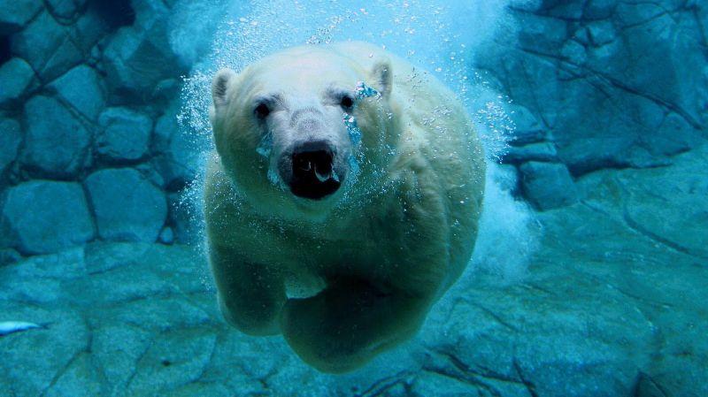 Polar Bear Swim @ Bathing Pools